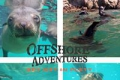 Offshore Adventures, Plettenberg Bay, Garden Route, South Africa