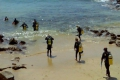 PRO DIVE - South Africa, Plettenberg Bay, Plettenberg Bay, Garden Route, South Africa