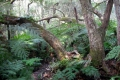 Valley of Ferns (Dal-van-Varings), Knysna, Garden Route, South Africa