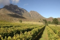 Herold Wines, George, Garden Route, South Africa