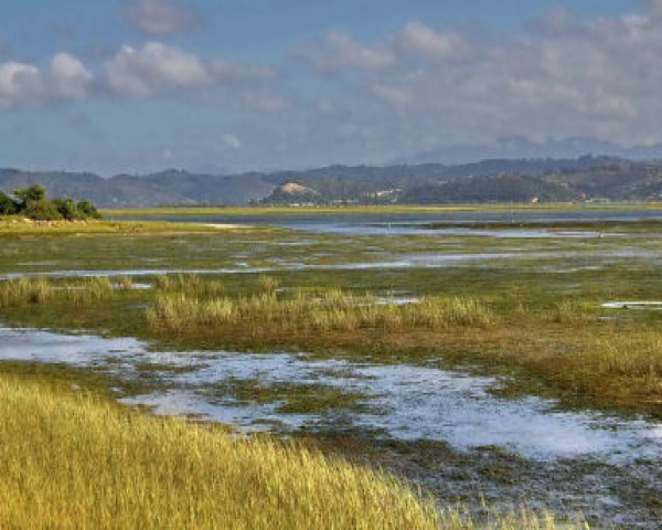 Seagrass beds of knysna knysna garden route south africa for Seagrass landscaping