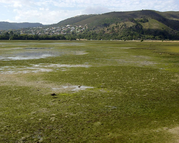 Seagrass beds of knysna knysna garden route south africa for Seagrass for landscaping