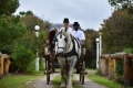 Horse and Carriage rides, Plettenberg Bay, Garden Route, South Africa