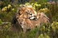 Gondwana Private Game Reserve, Mossel Bay, Garden Route, South Africa