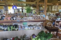 Natures Way Farm Stall, Farm Stall, Plettenberg Bay, Garden Route, South Africa