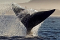 Whale-watching from a Khoisan cave, Mossel Bay, Garden Route, South Africa