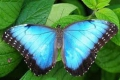 Brenton Blue Butterfly Reserve, Knysna, Garden Route, South Africa