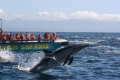 Ocean Safaris, Plettenberg Bay, Garden Route, South Africa