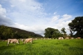 Grootvadersbosch Farm, Farm Stay, Heidelberg, Garden Route, South Africa