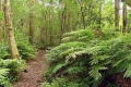 Southern Cape forest subtype 4: Moist high forest., Knysna, Garden Route, South Africa