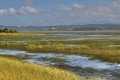 Seagrass Beds of Knysna, Knysna, Garden Route, South Africa