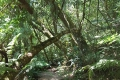 Circles in the Forest Trail, Knysna, Garden Route, South Africa