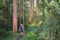 The Groeneweide Forest Trail, George, Garden Route, South Africa