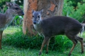 Blue Duiker Trail - Tsitsikamma Section, Garden Route National Park, Tsitsikamma, Garden Route, South Africa