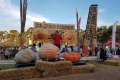Giant Pumpkin Festival, Heidelberg, Garden Route, South Africa