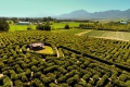 The Redberry Farm Hedge Maze, George, Garden Route, South Africa