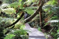 Forest Guided Tours, Knysna, Garden Route, South Africa