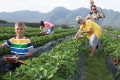 Redberry Farm, George, Garden Route, South Africa